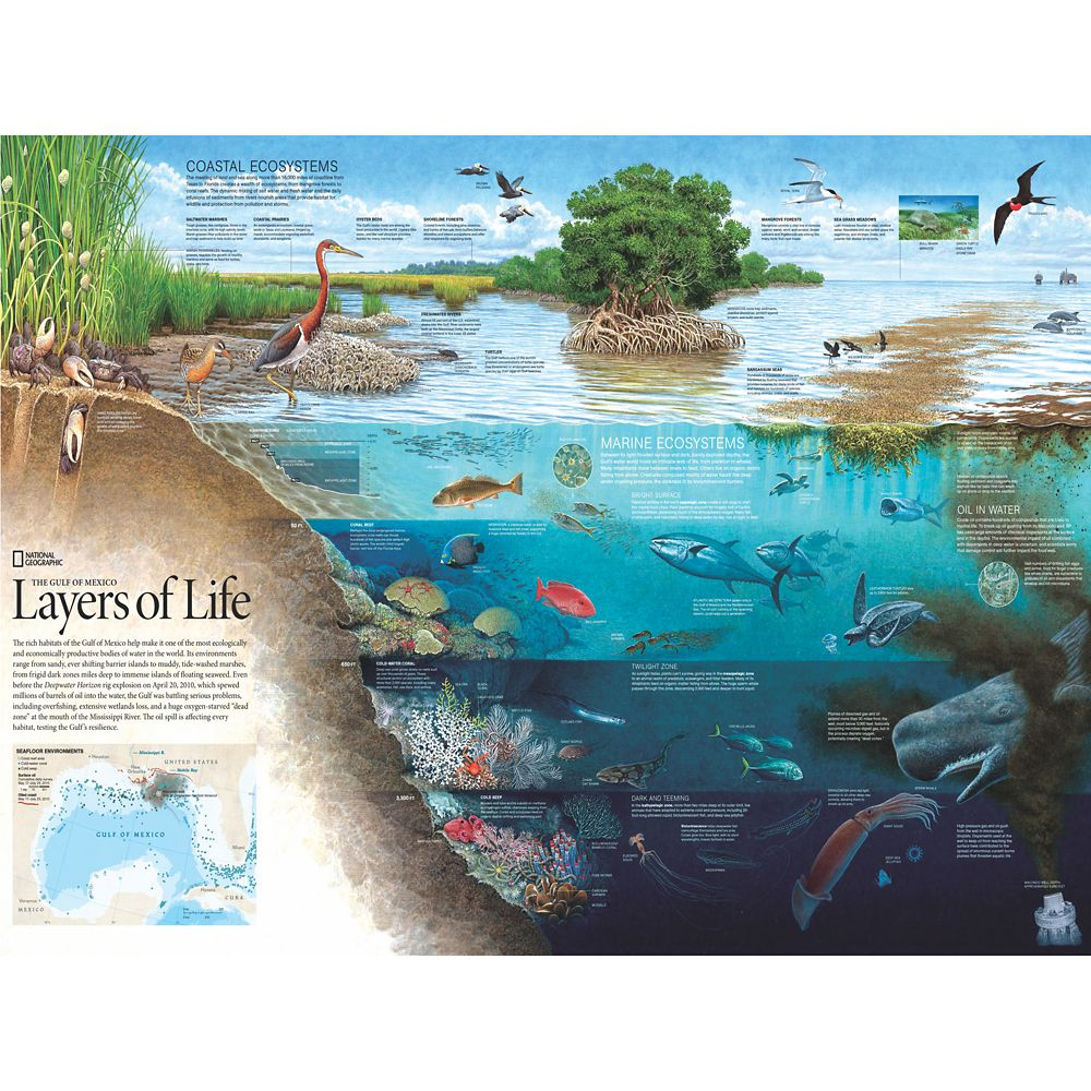 Layers of Life Puzzle –National Geographic