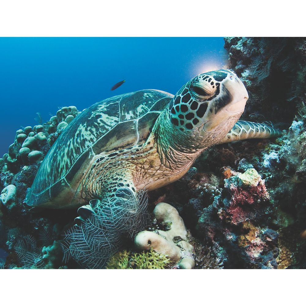 Green Sea Turtle Puzzle – National Geographic
