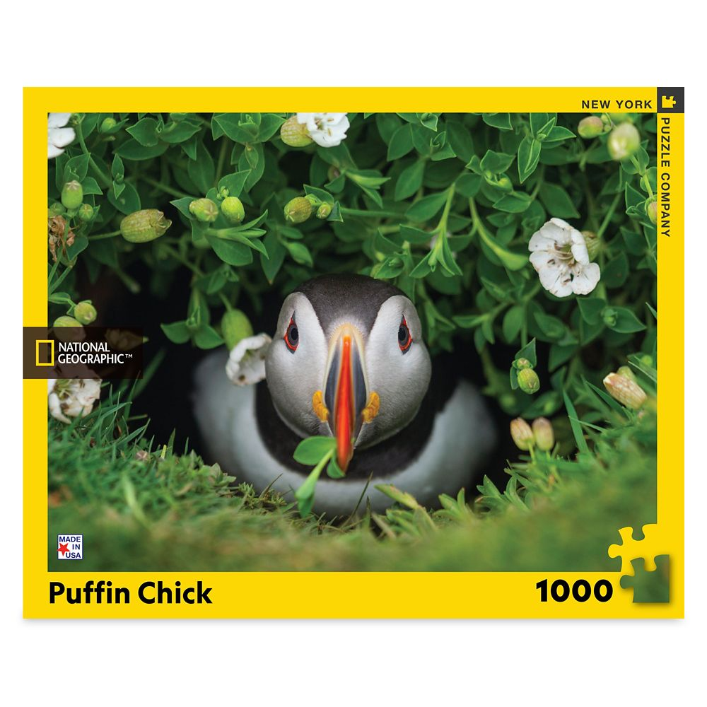 Puffin Chick Puzzle – National Geographic