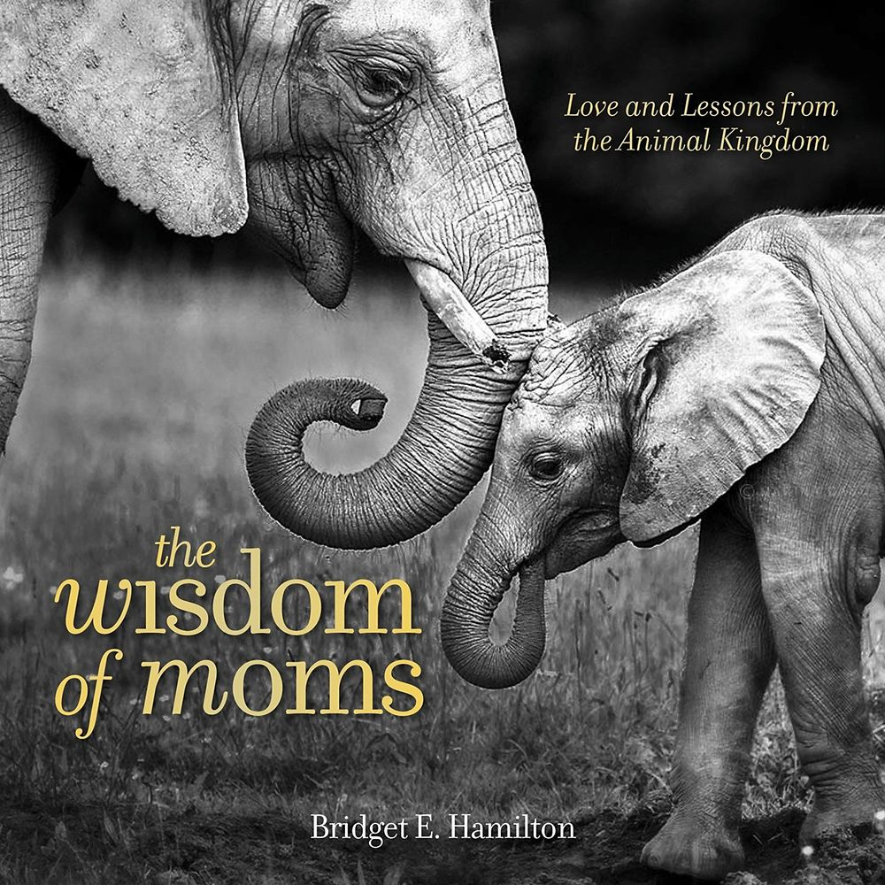 The Wisdom of Moms: Love and Lessons from the Animal Kingdom – National Geographic