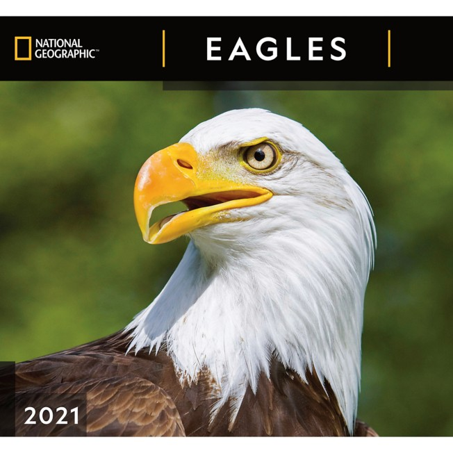 National Geographic 2021 Eagles Wall Calendar