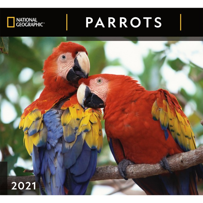 National Geographic 2021 Parrots Wall Calendar