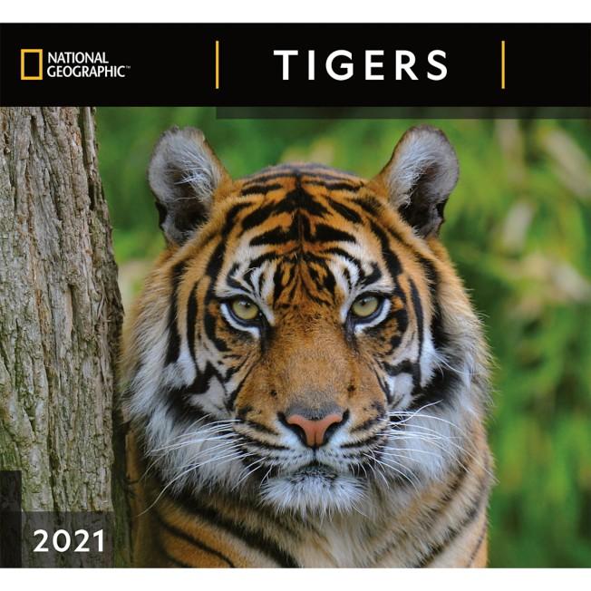 National Geographic 2021 Tigers Wall Calendar