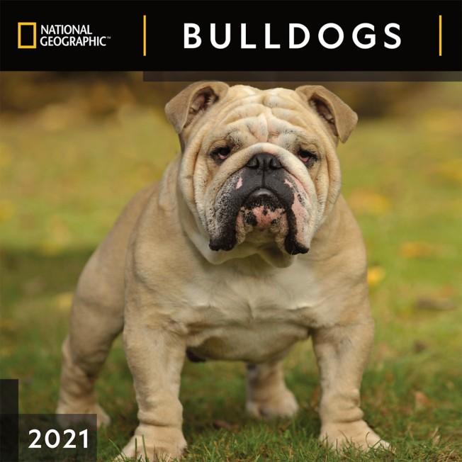 National Geographic 2021 Bulldogs Wall Calendar