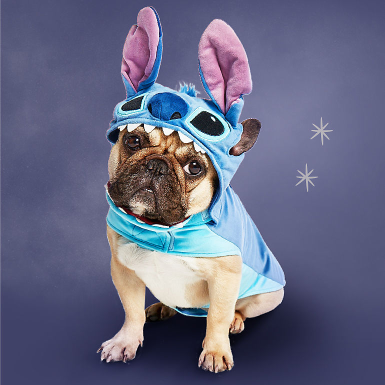 Dog in Stitch costume
