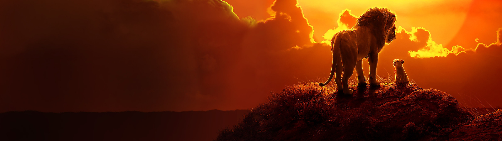 Background image of The Lion King - 2019 Film